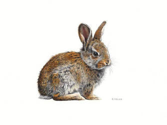 Bunny Drawing by EsthervanHulsen