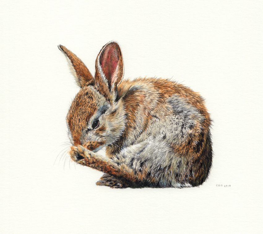 Baby Rabbit by EsthervanHulsen
