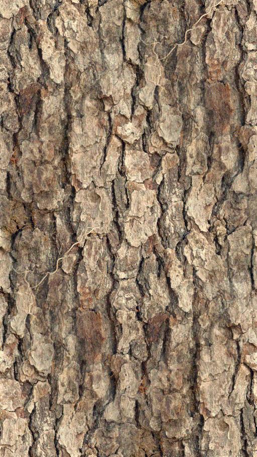 Bark by kernill