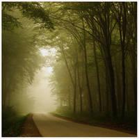 Fall series: misty road by kozelova