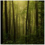 Fall series: olive green by kozelova