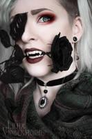 ~ Velvet black Roses ~ by Vanderstorme