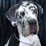 His Majesty - Dog by bojar