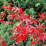 Autumn Colours I by bojar
