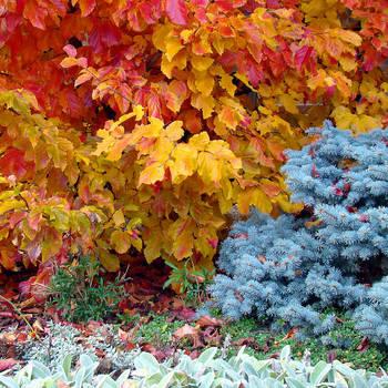 Autumn Colours II by bojar