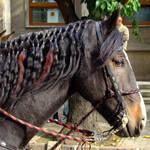 Horse's Styling by bojar