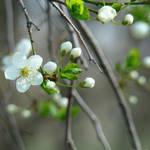 Silver Spring by bojar