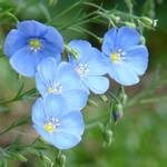 One Blue by bojar