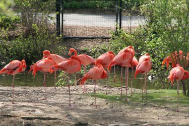 Flamingo 1 by lilbic08