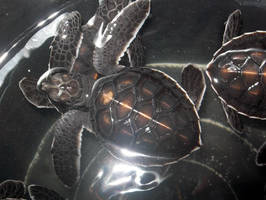 baby turtle  by sharkn06