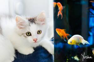 Catfish by YoshaPhotography