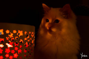 Flamboyant by YoshaPhotography
