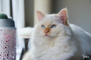 Baby blue eyes by YoshaPhotography