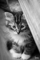 Peeking out by YoshaPhotography