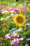Wild flowers by YoshaPhotography