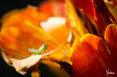 Patience, young grasshopper by YoshaPhotography