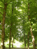 Shadowed by trees by Riibu