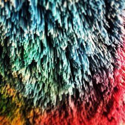 Rainbow Fur by Saphira001