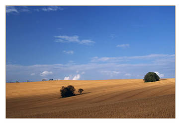 golden field by Hasche