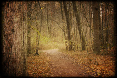 Hidden Path by Kryptisk