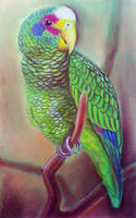 Parrot by diana-0421