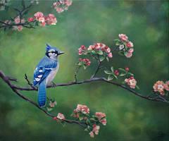 Blue jay by diana-0421