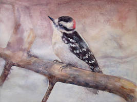 Male downy woodpecker on branch by diana-0421
