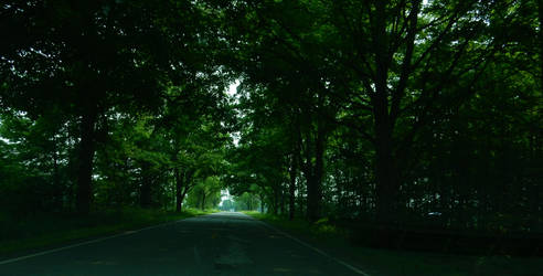 Forest Road by druid69