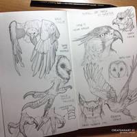 Creatuanary 01 Birds Of Prey Studies by rafater