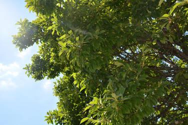 Green tree by StellaeArrente