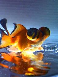my goldfish by ponyson