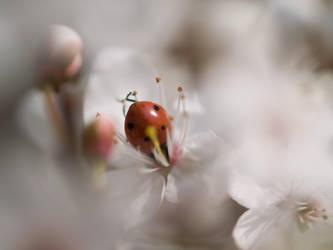 Hanami Ladybug by Muehsam