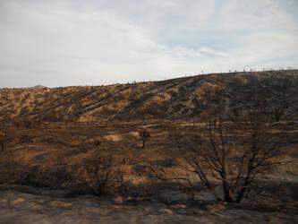 Vacation Pic: Fire Damage on  Mt Charleston by KdaAnimefan