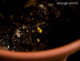 Strange World by Olsonmabob