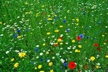 Wild Flowers 2 by Forestina-Fotos