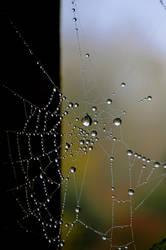 Dewy Web by Forestina-Fotos