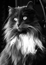 Black And White Beauty by Forestina-Fotos