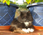 Loki Between The Plant Pots by Forestina-Fotos
