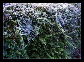 Frozen Cobwebs by Forestina-Fotos