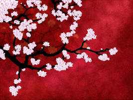 Cherry Blossoms by Niten11