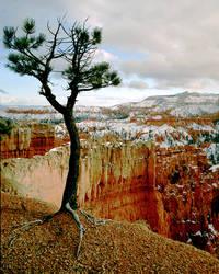 The Walking Tree by ottomatt