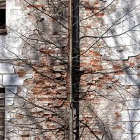 New veins by Igor-Demidov