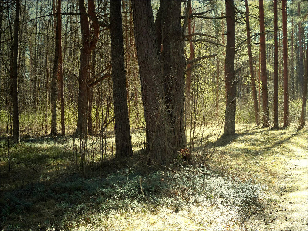 Forest 16 by MASYON
