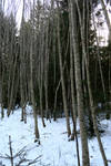 Winter forest 1186 by MASYON