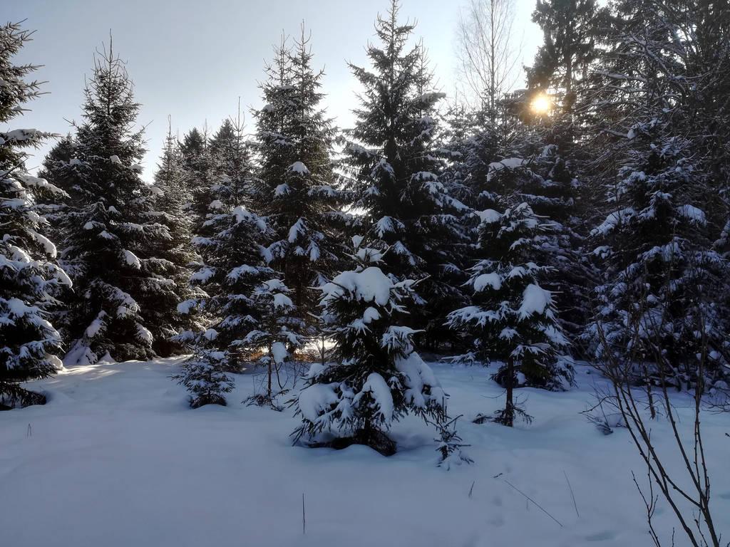 Moisakula winter forest 665 by MASYON