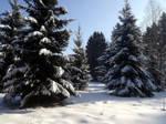 Moisakula winter forest 680 by MASYON