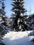Moisakula winter forest 681 by MASYON
