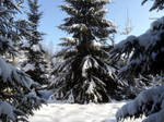 Moisakula winter forest 682 by MASYON