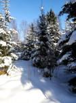 Moisakula winter forest 685 by MASYON