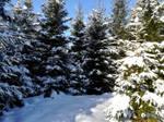 Moisakula winter forest 686 by MASYON